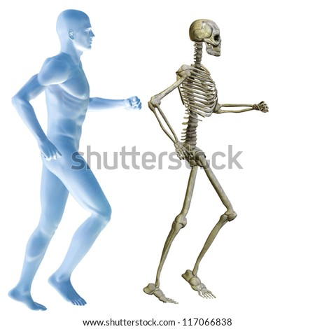 High resolution conceptual 3D human ideal for anatomy,medicine and health designs, isolated on white background. It is a man made of a skeleton and a transparent blue body as in a x-ray - stock photo