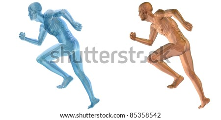 High resolution conceptual 3D humans ideal for anatomy,medicine and health designs, isolated on white background. It is a man made of a skeleton and a transparent blue body as in a x-ray - stock photo