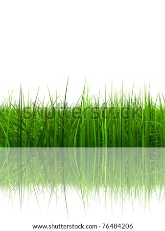 High resolution conceptual green grass in summer isolated on white background with a reflection in water - stock photo