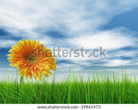 high resolution 3d green grass over a blue sky with white clouds as background and a nice yellow gerbera flower at horizon. Ideal for nature,green or sport designs. - stock photo