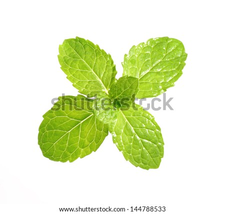 High resolution fresh and green peppermint leaf on a white simple background