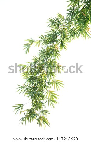 High resolution image of bamboo leaves isolated on a white background - stock photo