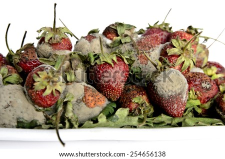 High resolution image of rotten strawberries - stock photo