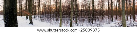 High-resolution panoramic view of a forest in winter - stock photo