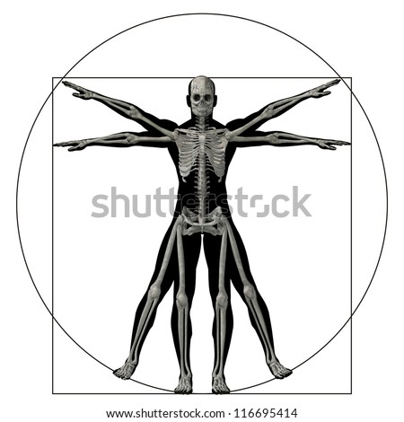 High resolution Vitruvian human or man as a concept,metaphor or conceptual 3d anatomy body for biology,anatomical, proportion ,medicine,symbol,physiology,skeleton,health,humanity or morphology - stock photo