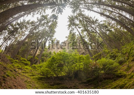 High rocks surrounded by deep coniferous forests with bilberry front in the backlight. Creative landscape backlit photography by using fisheye lens. - stock photo