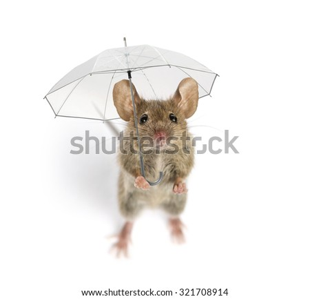 High view of a Wood mouse holding an umbrella in front of a white background - stock photo