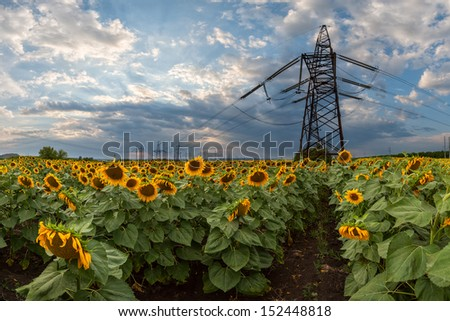 High-voltage support of a power line in the field of sunflowers - stock photo