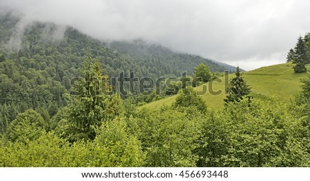 Highland Carpathians landscape. Green sunny glade , spruce and deciduous trees  in clouds. Recreation zone.