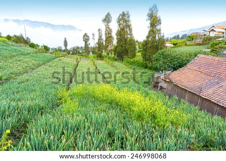 highland vegetable farm at countryside - stock photo