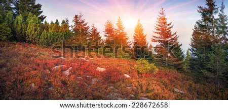 highland vegetation modest summer and unusually beautiful colors blooms in autumn, before cold weather. Blueberries,  bright red, coniferous forest green, orange buk- mountains sinie- fantastic charm.