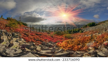 highland vegetation modest summer and unusually beautiful colors blooms in autumn, before cold weather. Blueberries bright red, coniferous forest green, orange buk- mountains sinie- fantastic charm. - stock photo
