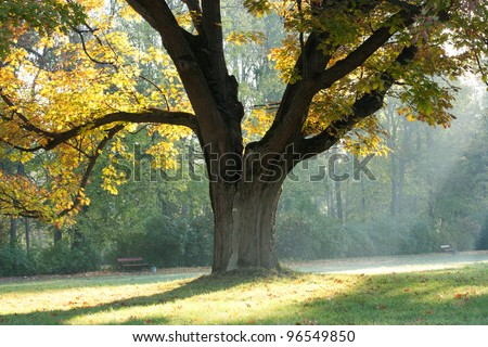 Highlights of the morning and an old oak tree - stock photo