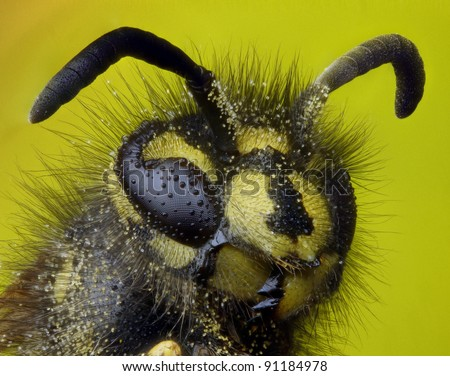 Highly detailed close up profile of a common wasp
