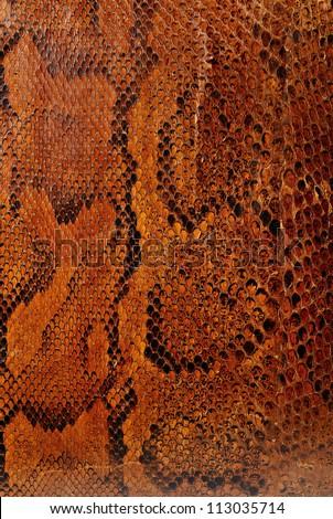 Highly patterned snake skin close up - stock photo