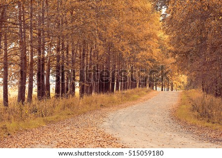 Highway autumn landscape