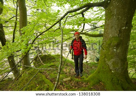 hiker at Black Forest in spring, Germany