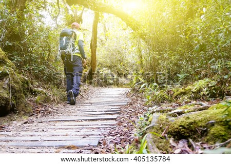 Hiker in a nature green forest with sunny light morning - stock photo