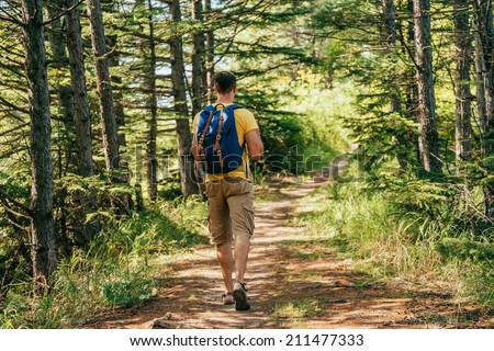 Hiker man with backpack going on path in summer forest, rear view