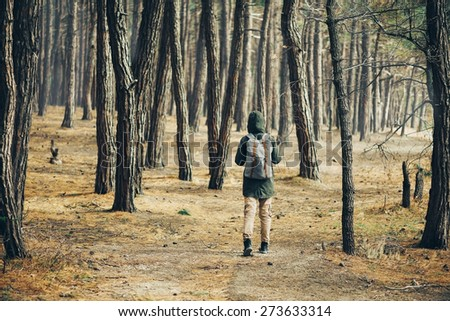 Hiker young woman with backpack walking in a pine forest, rear view - stock photo