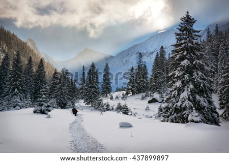 Hikers in a winter forest at sunset