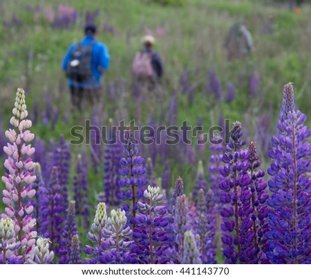 Hikers in meadow