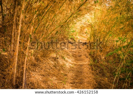 Hiking a long distance trail in bamboo forest - stock photo