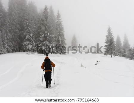 Hiking in winter through a foggy forest in Carpathian