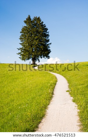 Hiking path at a lonely tree in the alps
