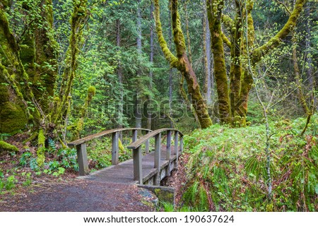 hiking path in a wooded area with vivid greens in spring in oregon