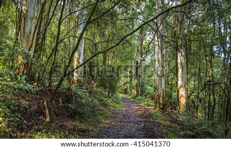 hiking path sunny Lyrebird trail Mt Dandenong fern tree gully rainforest