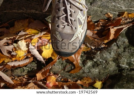 hiking shoe in forest - stock photo
