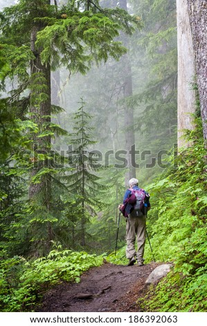 Hiking the Heliotrope Ridge Trail. A senior citizen hikes in the Mt.Baker National Forest on the Heliotrope Ridge trail that leads to the summit of the mountain. Fir and cedar trees are dominant.