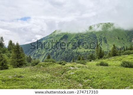 Hiking trail among alpine green flowering meadows - stock photo