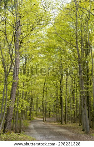 Hiking trail in a forest, taken at Dundas conservation area, Ontario, Canada. - stock photo