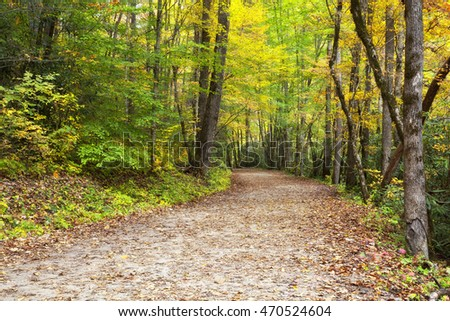 Hiking Trail in Deep Creek Area at Bryson City, North Carolina in the Fall