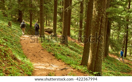 Hiking trail in forest in Prespa national park near Bitola on Baba mountain in Summer with woman walking  shot from behind  - stock photo