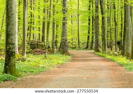 Hiking trail in lush green beech forest in springtime. - stock photo