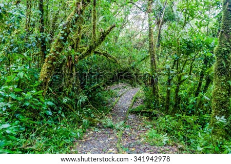 Hiking trail in National Park Podocarpus, Ecuador - stock photo