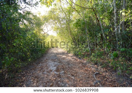 Hiking trail in the jungle near San Ignacio, Belize. Central America