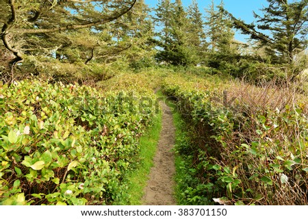 hiking trail in the Pacific Northwest rain forest at Cape Disappointment on the Washington coast - stock photo
