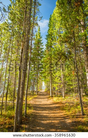Hiking Trail in the Wilderness.  Grand Tetons National Park, Jackson Hole, Wyoming, USA. - stock photo