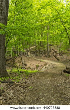 Hiking Trail In The Woods During Spring - stock photo