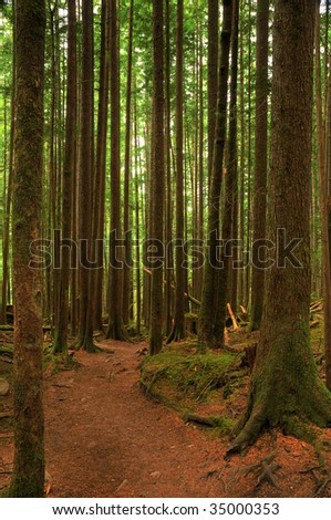 Hiking trail through dark and dense forest - vertical HDR image