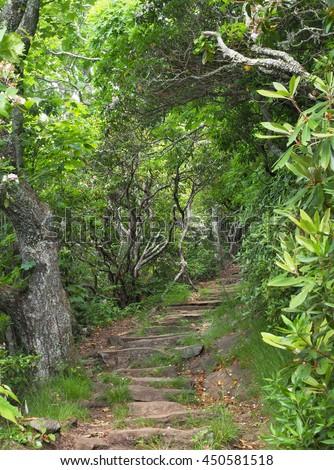 Hiking Trail Up Mount Pisgah Off the Blue Ridge Parkway, North Carolina - stock photo