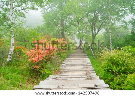 Hiking trails and Rengetsutsuji - stock photo