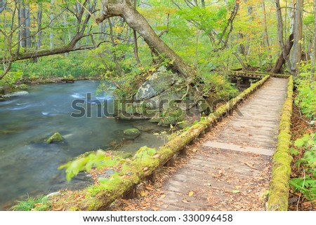 Hiking trails at Oirase Stream (Oirase Keiryu), Aomori Prefecture, Tohoku region, Japan. Oirase Stream is the most famous and popular autumn colors destinations in Japan. - stock photo