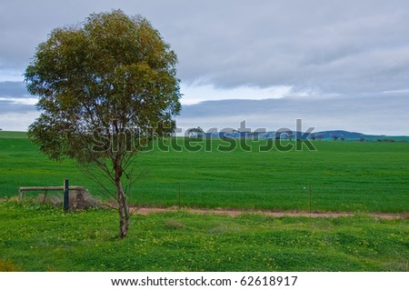 hill and grass in the australian landscape, south australia