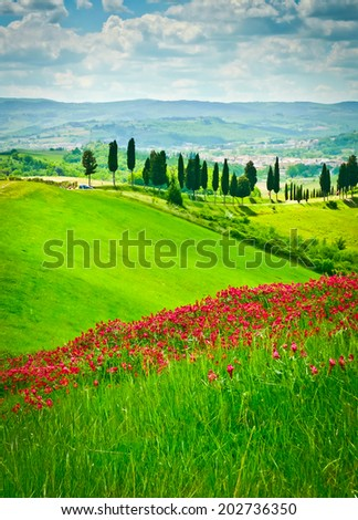 Hill covered by red flowers overlooking a road lined by cypresses on a sunny day near Certaldo, Tuscany, Italy - stock photo
