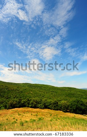 Hill In Tuscany, Covered With Beech Forests